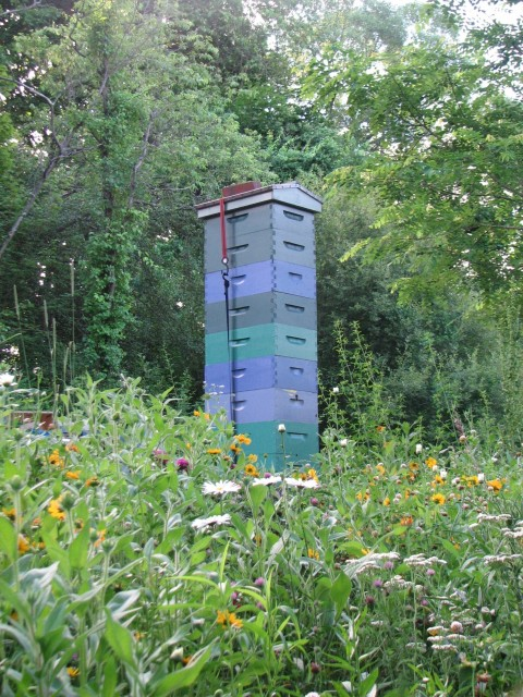 Tall hives 090